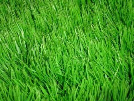 طريقة زراعة الثيل .. تعلم خطوات زراعة المسطحات الخضراء بالبذور والرولات وكيفية العناية بها