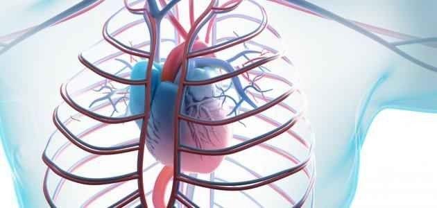 نصائح لمرضى القلب