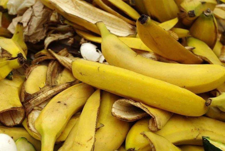 استخدامات قشر الموز… دليلك الكامل للتعرف على استخدامات وفوائد قشر الموز