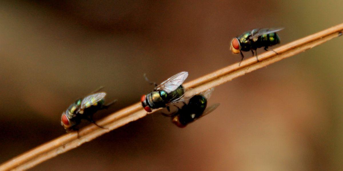 طرق مكافحة الحشرات واسعارها