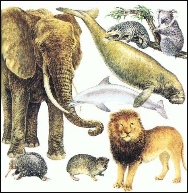 هل تعلم عن الثديات… تعرف على معلومات عن الثدييات وبنيتها الجسدية وأنواعها /  بحر المعرفة