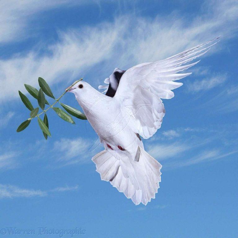 هل تعلم عن السلام .. تعرف على أبرز المعلومات الخاصة بالسلام بين الشعوب  بحر المعرفة