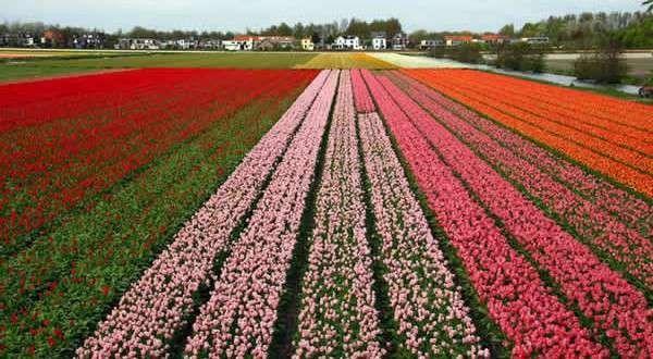السياحه في هولندا شهر سبتمبر..وأبرز الفعاليات والمهرجانات فى شهر سبتمبر..