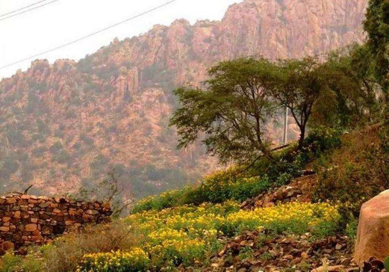 الطبيعة في الطائف… تعرف على الطبيعة الخضراء لمدينة الطائف