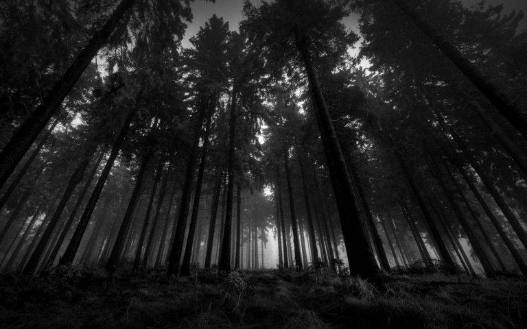 السياحة في الغابات السوداء – طبيعة ساحرة وملاهي عالمية ومتاحف عريقة
