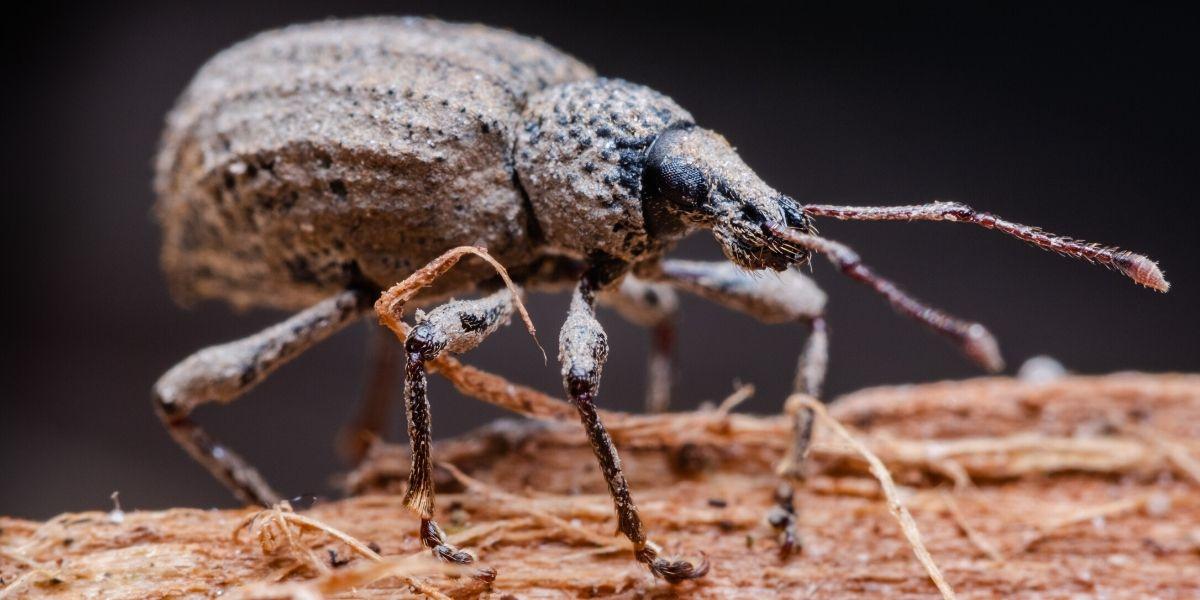القضاء على البق والحشرات بالخل