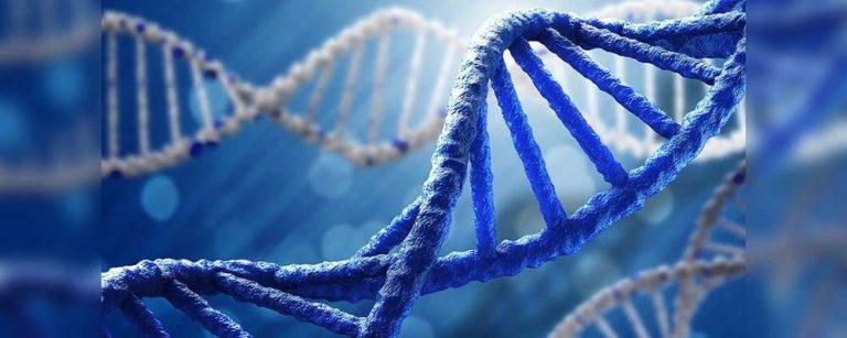 الصفات الوراثية .. معلومات هامة عن الجينات