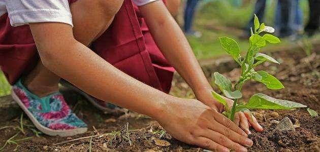 افكار لليوم العالمي للشجرة…. تعرف على افكار لليوم العالمي للشجرة l  بحر المعرفة