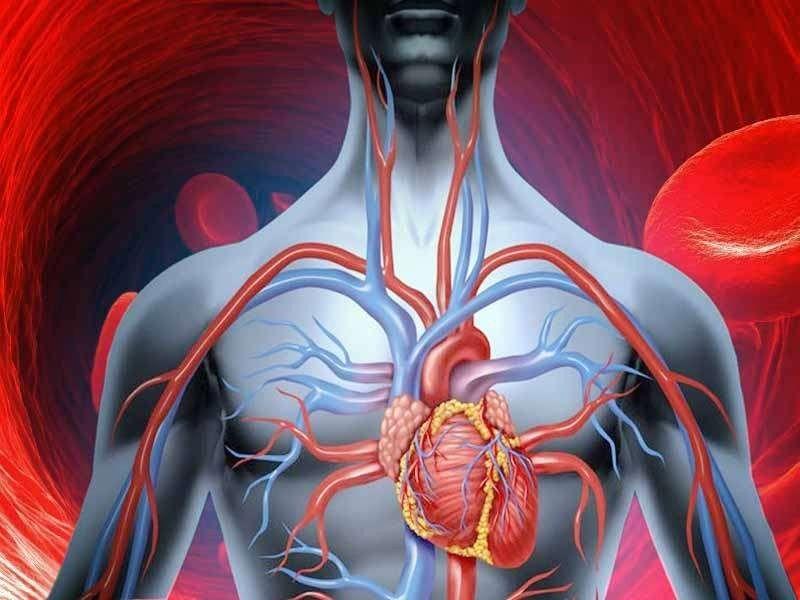 طرق وقاية الجهاز الدوراني .. نظام الدورة الدموية والحفاظ عليه