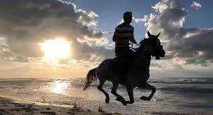 ركوب الخيل – الفوائد الجسدية والنفسية لركوب الخيول