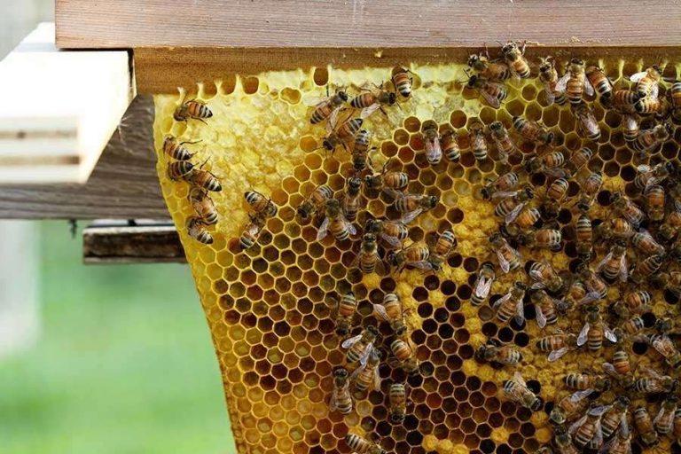 تغذية النحل في الشتاء .. أشياء مسموح بها وأخرى ممنوعة عند تغذيته وتربيته –