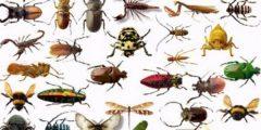 تفسير رؤية الذباب والبعوض والناموس