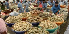 معلومات عن سوق السمك جميرا