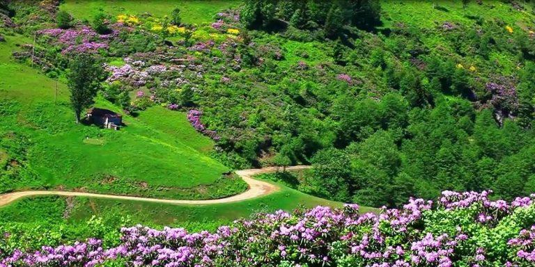 حديقة الزهور في طرابزون… تعرف على معلومات عن حديقة الزهور بمدينة طرابزون