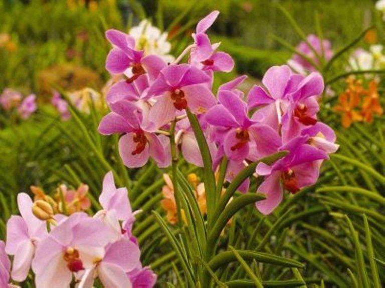 حديقة الزهور في كوالالمبور… تعرف على كل ما يخص حديقة الزهور في كوالالمبور ماليزيا