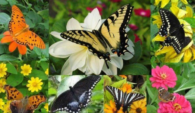حديقة الفراشات في كوالالمبور… تعرف على كل ما يخص حديقة الفراشات في كوالالمبور