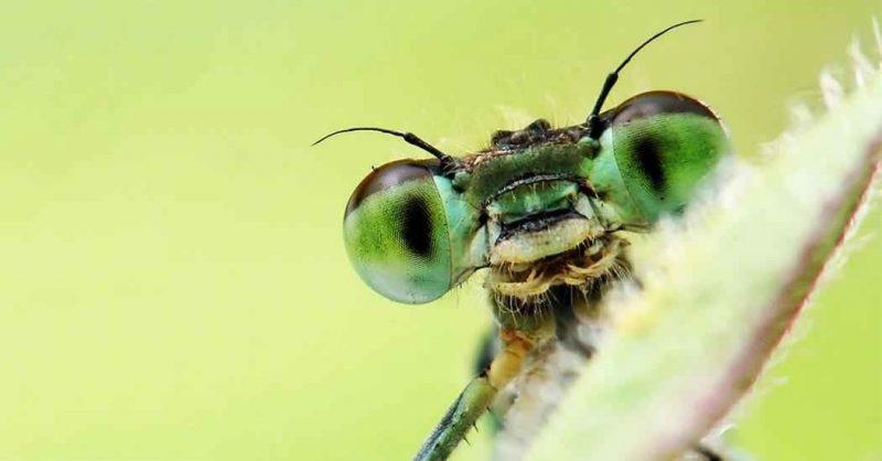 حقائق عن الحشرات … تعرف على أغرب حقائق عالم الحشرات وطرق تكاثرها وفوائدها