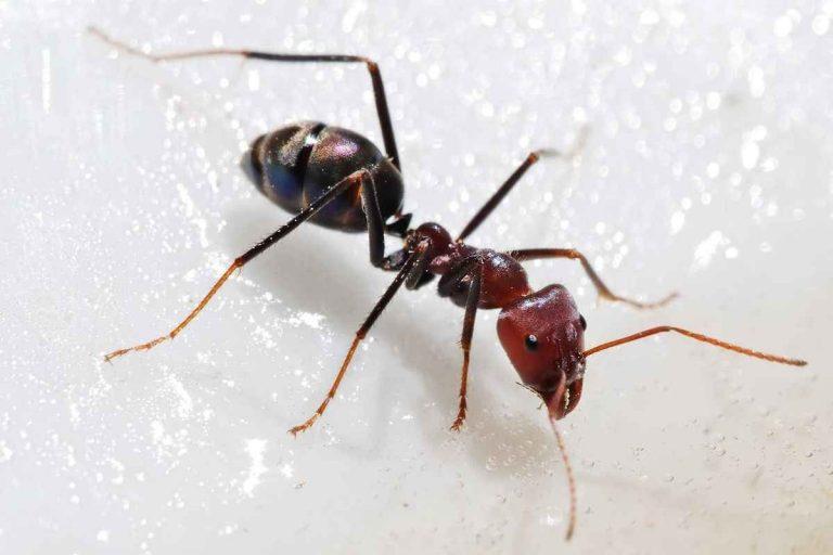 حقائق عن النمل .. طريقة المعيشة والمواصفات الخاصة به ومعلومات غريبة جداً –