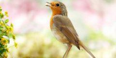كلام عن الطيور تويتر
