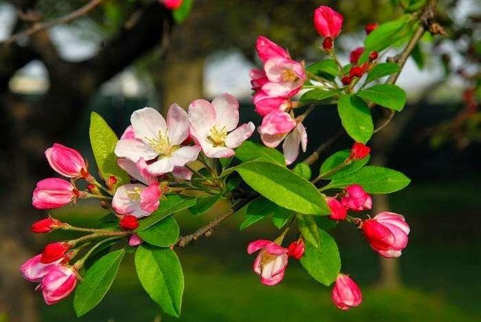 مميزات فصل الربيع للاطفال.. 11 ميزة لفصل الربيع أخبر طفلك بها