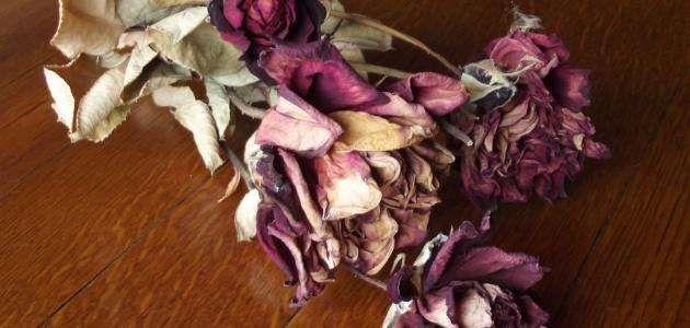 طريقة تجفيف الورد..كيفية حفظ جميع انواع الورد لفترات طويلة