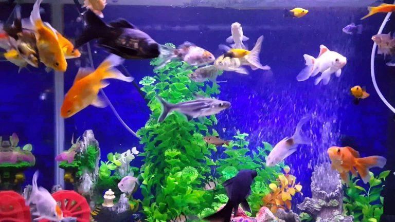 طريقة تربية السمك… دليلك للتعرف على الطرق الصحيحة لتربية السمك /  بحر المعرفة