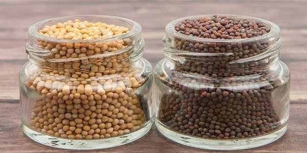 طريقة حفظ البذور ..تعرف على الطريقة المناسبة لحفظ البذور…………