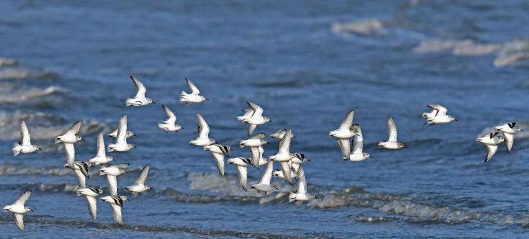 معلومات للأطفال عن الطيور … تعرف على أبرز الحقائق الهامة عن الطيور | بحر المعرفة