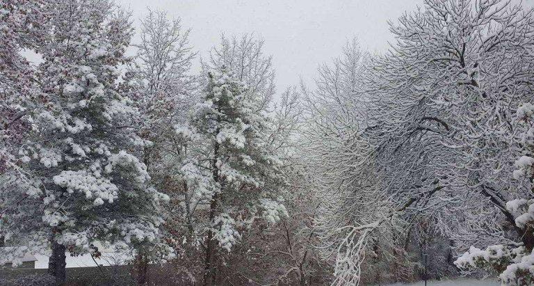 فصل الشتاء في مدينة دورام بولاية نورث كارولينا