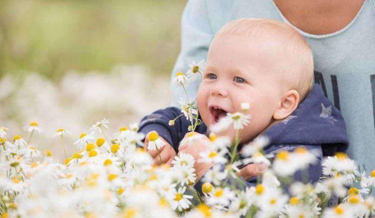 فوائد البابونج للاطفال .. البابونج وفوائده المتعددة للأطفال