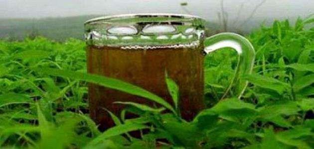 فوائد الشاي الاخضر الصيني .. إليك فوائد الشاى الأخضر الصينى …….
