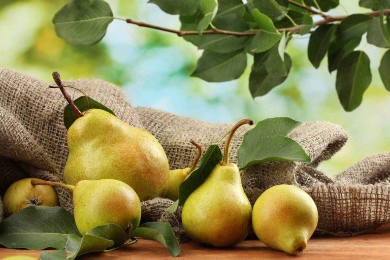 فوائد قشر الكمثرى .. يحتوي على العديد من العناصر الغذائية المهمة ومفيد للحوامل ولمرضى السكري