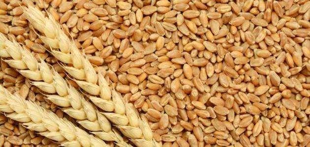 فائدة جنين القمح….. تعرف على أهم فوائدة للمرأه الحامل وجنينها   بحر المعرفة