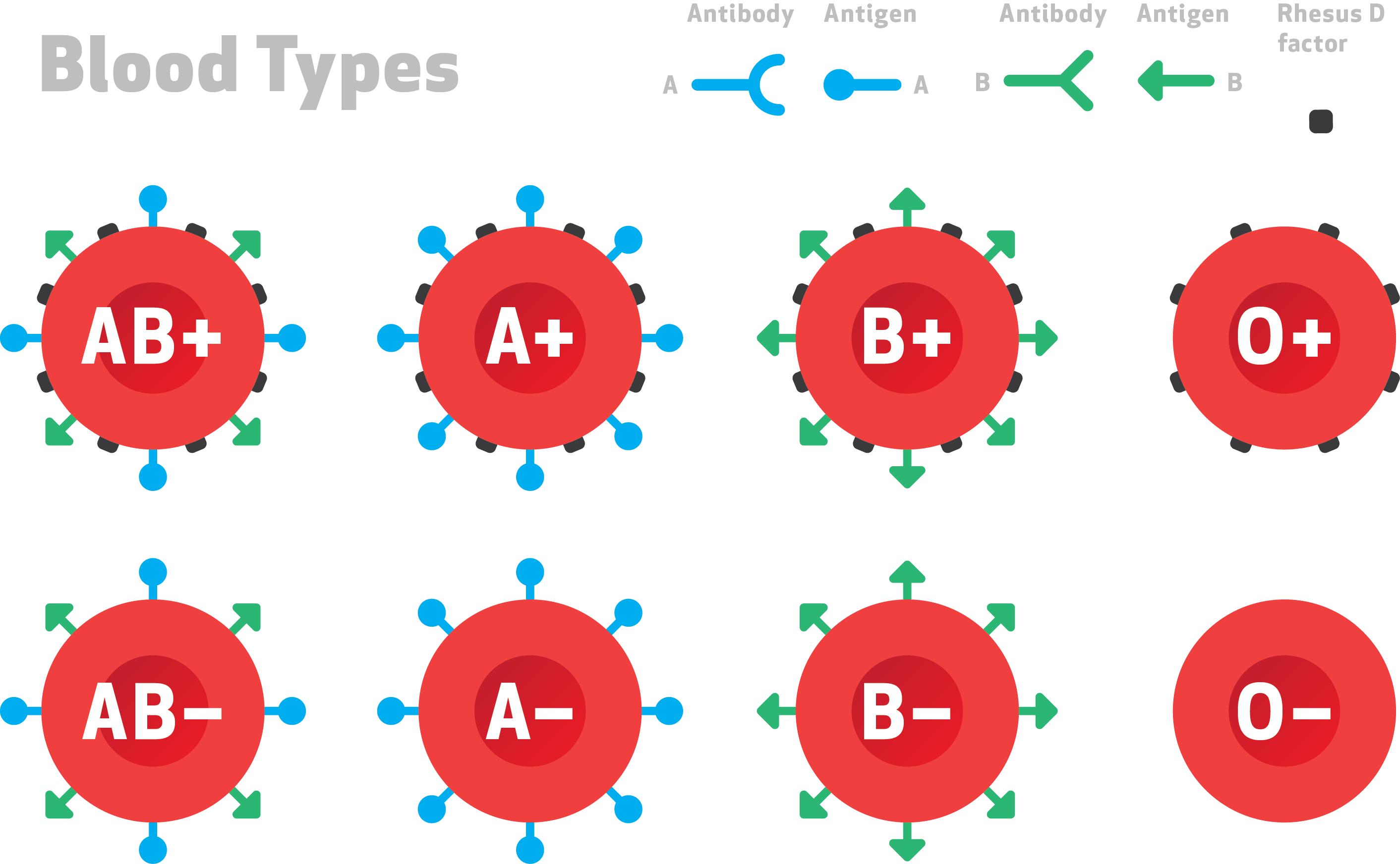 كيف أعرف فصيلة دمي دليلك الكامل لمعرفة كل ما يخص فصيلة دمك ؟