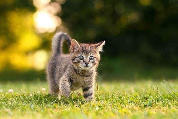 طرق تربية القطط الصغيرة