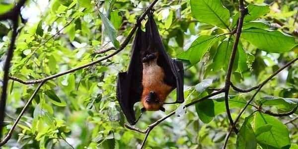 معلومات عن طائر الوطواط … تعرف على أسرار حياة هذا الحيوان الغريب والمميز