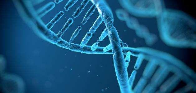 ماهو الحمض النووي .. معلومات عن الحمض النووى ………………….