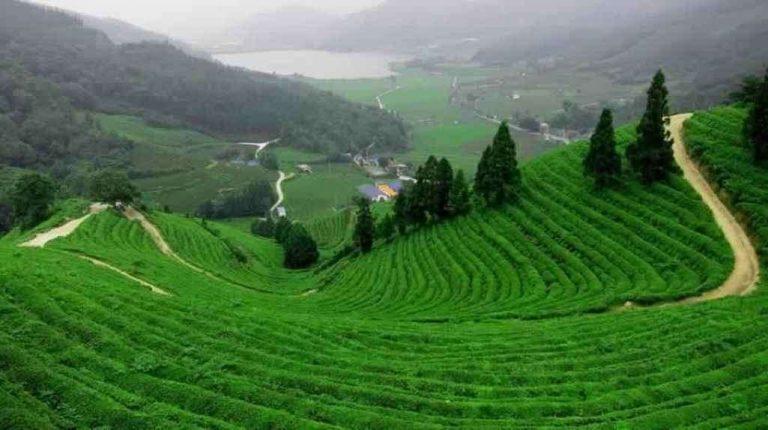 مزارع الشاي في ريزا تركيا… دليلك للتعرف على مزارع الشاي بمدينة ريزا التركية