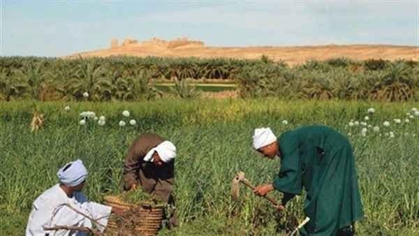 مصطلحات الزراعة .. تعرف على مصطلحات الزراعة بالانجليزي ومقابلها بالعربي –