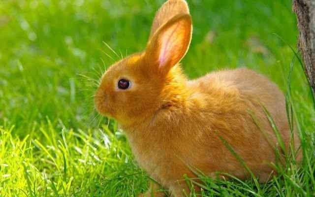 معلومات عن الأرنب .. إليك حقائق مذهلة ومعلومات عن حياة الأرانب وموطنهم حول العالم