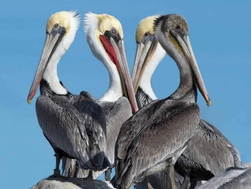 معلومات عن طائر البجع .. إليك مجموعة حقائق مدهشة عن البجع وأنواعه المختلفة