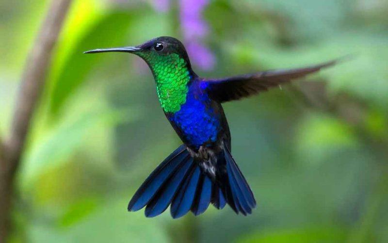معلومات عن طائر الطنان ،،، تعرف على حقائق مدهشة لم تسمع عنها من قبل لطائر الطنان