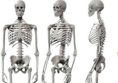 معلومات غريبة عن الهيكل العظمي .. حقائق وغرائب عن الهيكل العظمي تعرفها لأول مرة