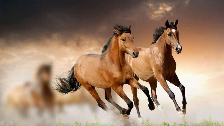 معلومات للأطفال عن الحصان… إليك 34 معلومة مبسطة عن الحصان من أجل طفلك /  بحر المعرفة