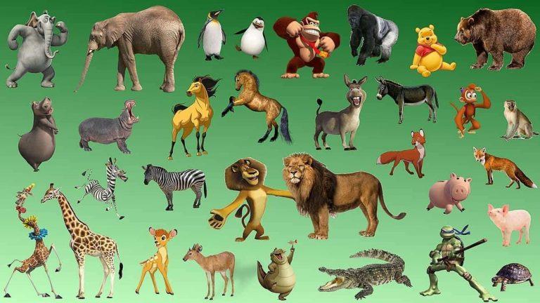 معلومات للأطفال عن الحيوانات… إليك بعض المعلومات المهمة للأطفال عن الحيوانات