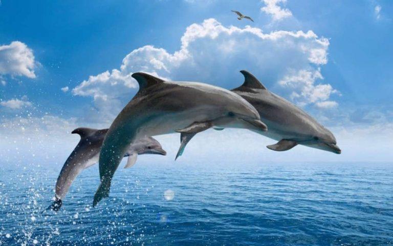 معلومات للأطفال عن الدولفين… 30 معلومة عن الدلافين أخبر طفلك بها –