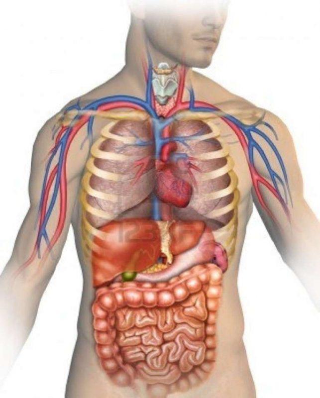 معلومات للأطفال عن جسم الإنسان… تعرف على بعض المعلومات المهمة عن جسم الإنسان
