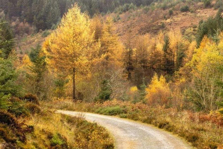 معلومات للاطفال عن فصل الخريف .. تعرف على سر تحول لون أوراق الشجر إلى اللون البني
