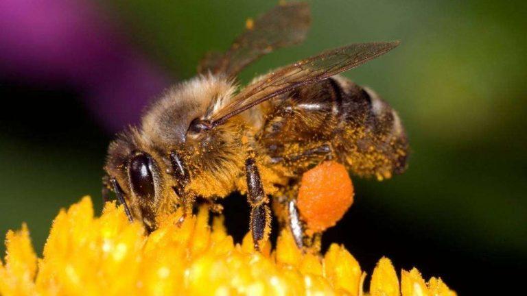 هل تعلم عن النحل ؟… تعرف على معلومات مبسطة عن النحل /  بحر المعرفة