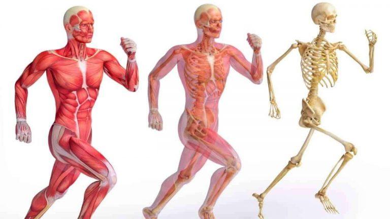 هل تعلم عن الهيكل العظمي .. حقائق مذهلة حول الهيكل العظمي